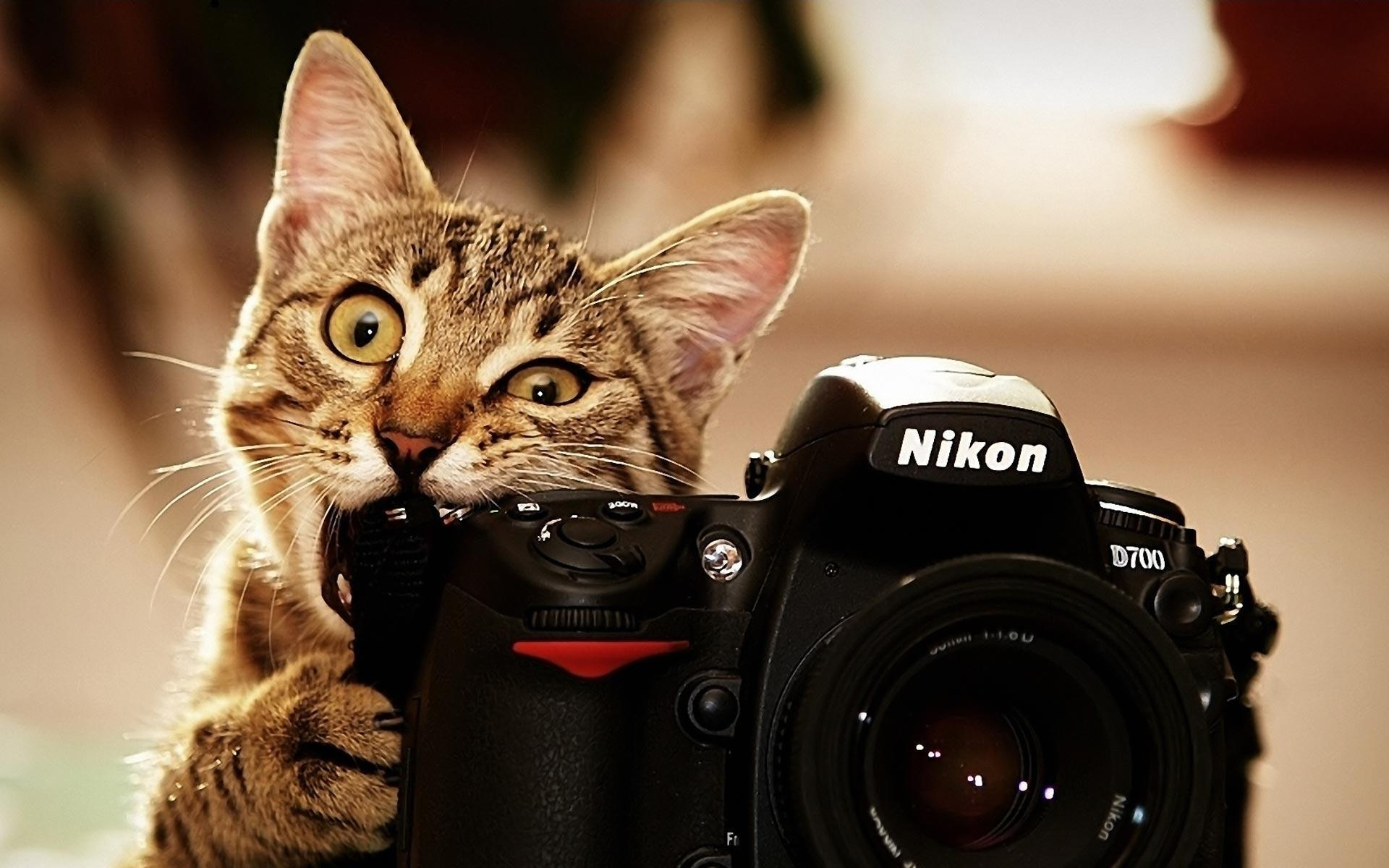 funny cat desktop wallpapers - wallpaper cave