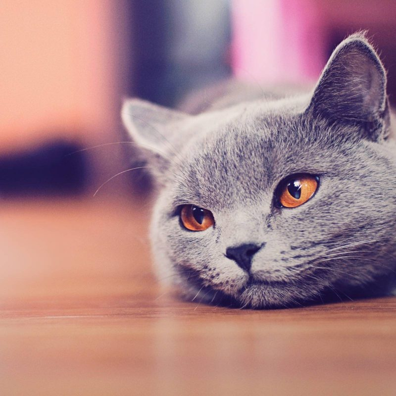 10 Most Popular Cute Cat Desktop Wallpaper FULL HD 1920×1080 For PC Desktop 2018 free download funny cat desktop wallpapers wallpaper cave 800x800