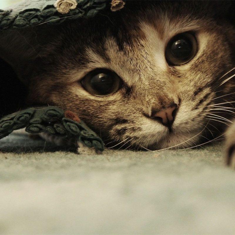 10 Top Funny Cat Desktop Wallpaper FULL HD 1080p For PC Desktop 2018 free download funny cat images in hd for desktop and mobile 800x800