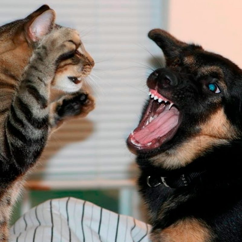 10 New Cat And Dogs Pictures FULL HD 1080p For PC Background 2018 free download funny cats and dogs part 7 funny cats vs dogs funny animals 800x800