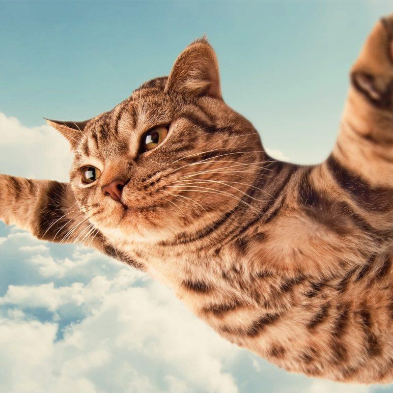 10 Top Funny Cat Desktop Wallpaper FULL HD 1080p For PC Desktop 2018 free download funny cats gangster hd desktop wallpaper instagram photo 800x800