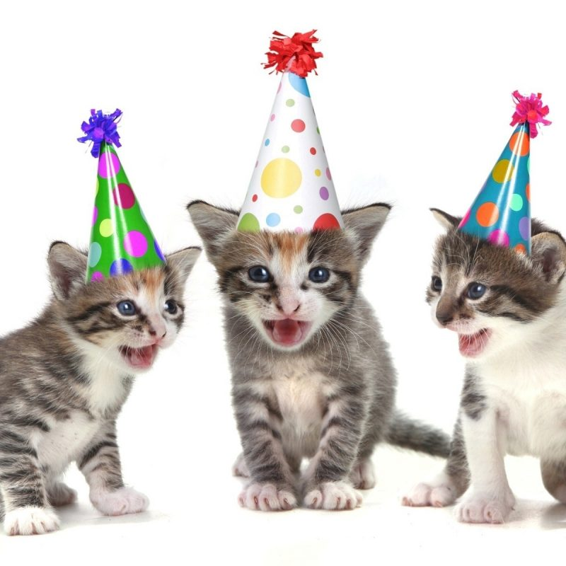 10 Most Popular Funny Happy Birthday Wallpaper FULL HD 1920×1080 For PC Desktop 2018 free download funny cats wish you happy birthday hd wallpapers rocks 800x800