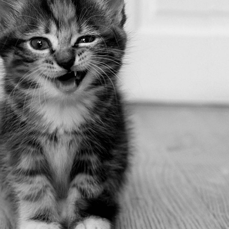10 Most Popular Cute Cat Desktop Wallpaper FULL HD 1920×1080 For PC Desktop 2018 free download funny cute cat desktop wallpaper i hd images 800x800
