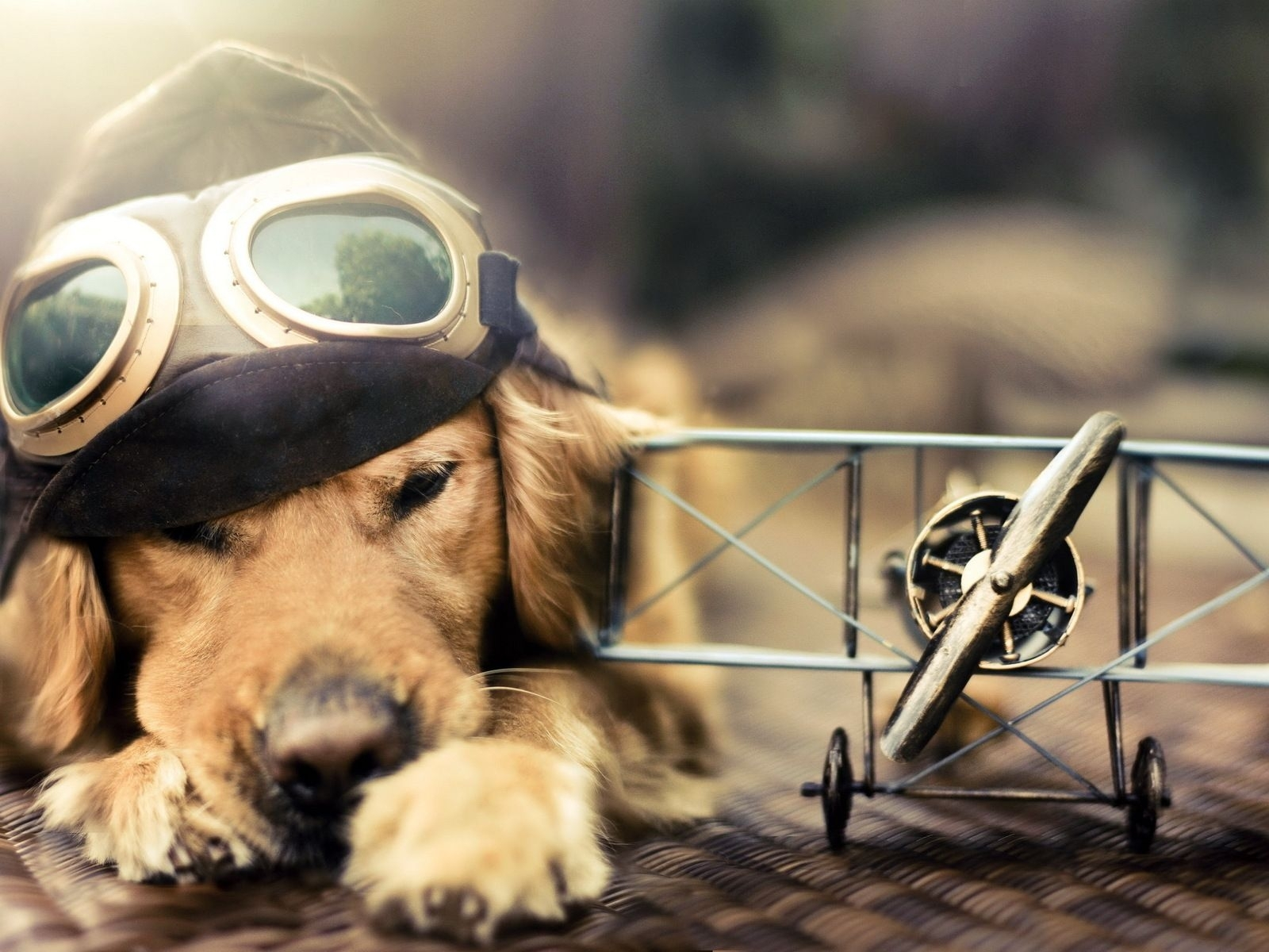 funny dog wallpapers for desktop - wallpapersafari | wallpapers