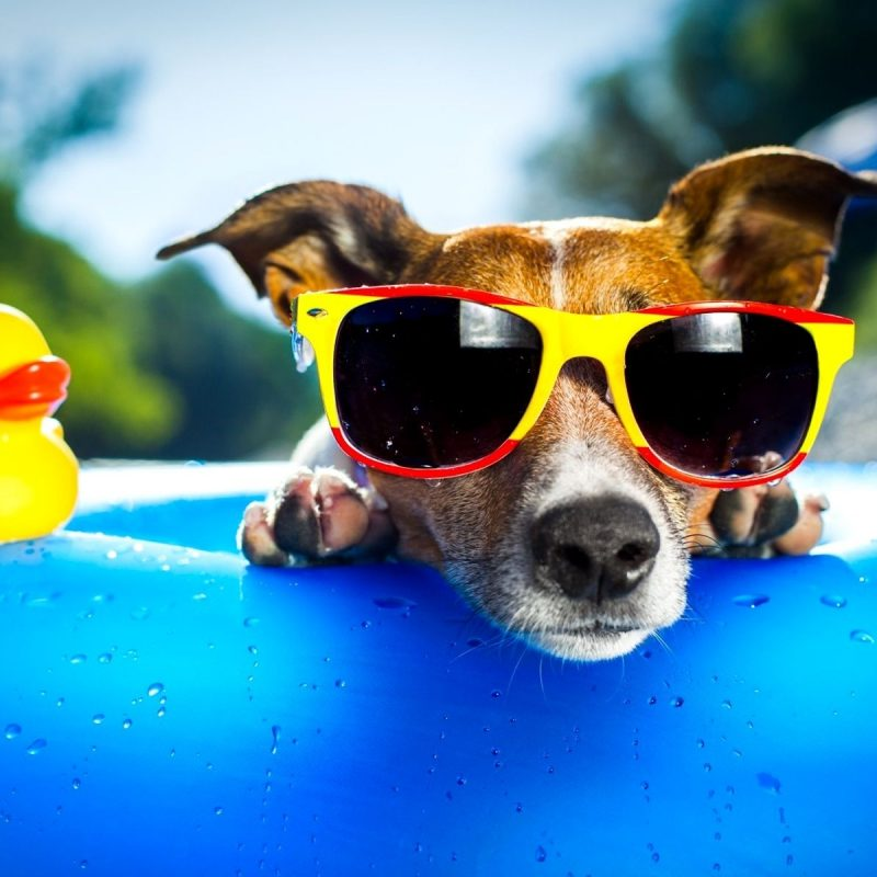 10 Latest Funny Dog Wallpaper Hd FULL HD 1080p For PC Desktop 2018 free download funny dog wallpapers wallpaper cave all wallpapers pinterest 800x800