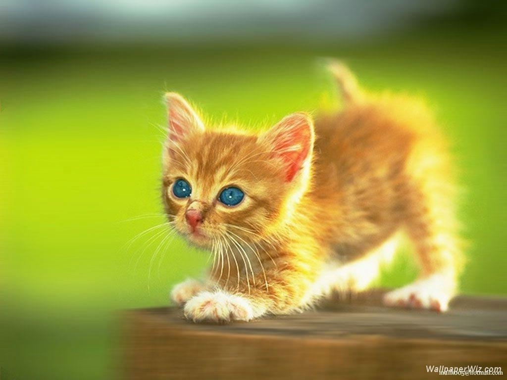 funny kittens wallpapers - wallpaper cave