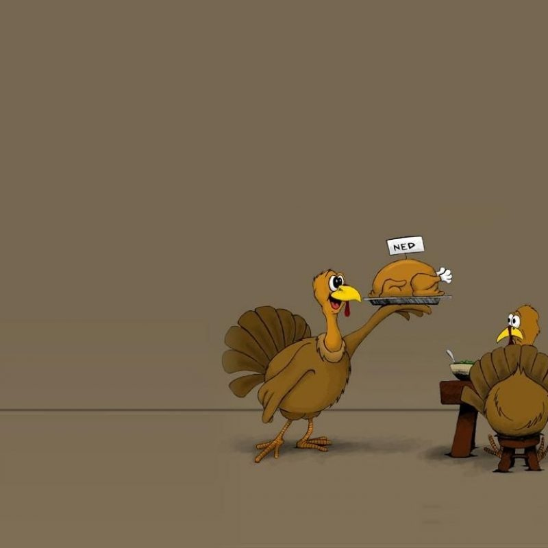10 New Turkeys For Thanksgiving Wallpaper FULL HD 1080p For PC Desktop 2020 free download funny thanksgiving wallpaper holiday thanksgiving pinterest 800x800