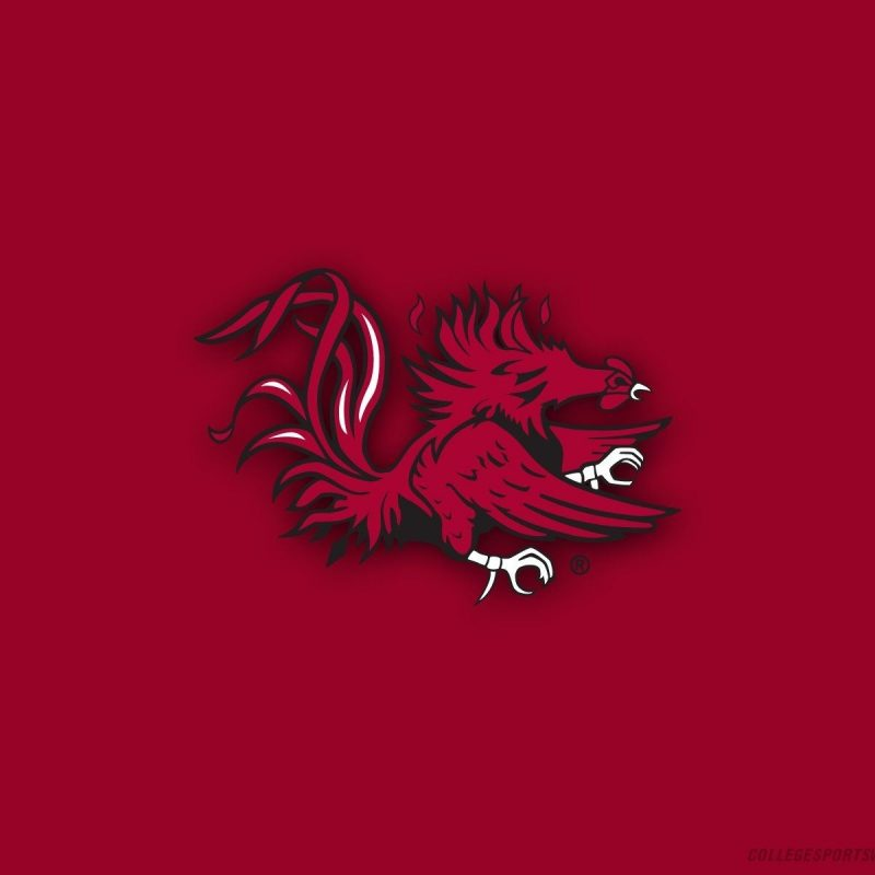 10 Top University Of South Carolina Wallpaper FULL HD 1080p For PC Background 2021 free download gamecocks wallpapers group 52 800x800