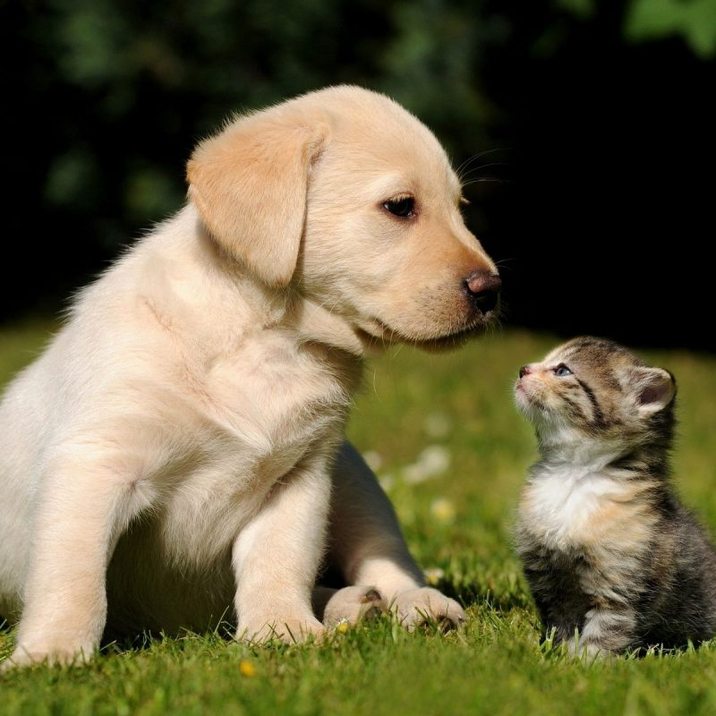 10 Top Kittens And Puppies Pics FULL HD 1920×1080 For PC Desktop 2021 free download great tips on how to save money on your pets food and medical bills 1 800x800
