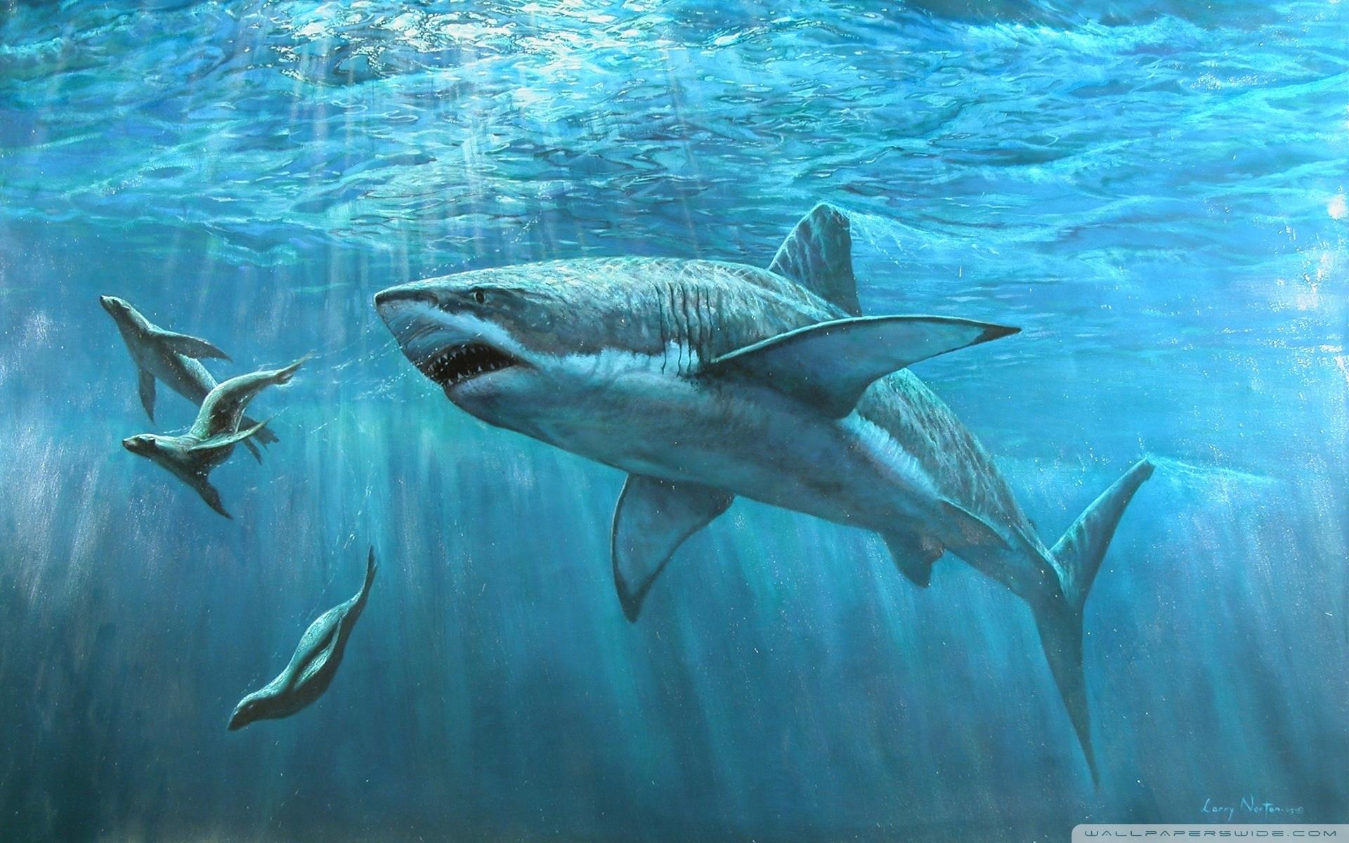 great white shark painting ❤ 4k hd desktop wallpaper for 4k ultra