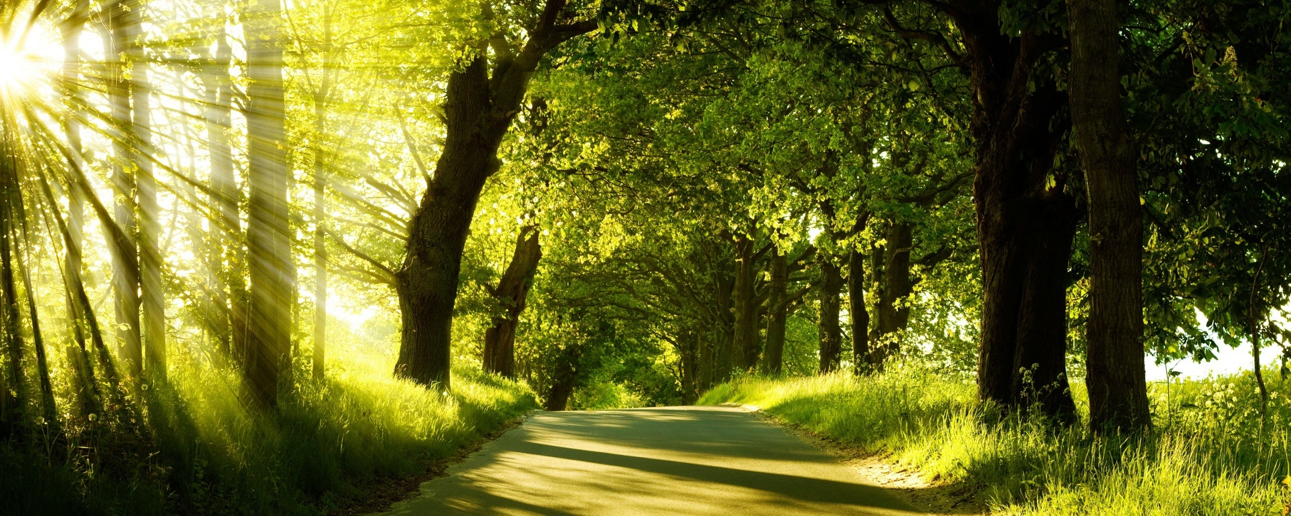 green nature dual monitor wallpapers | hd wallpapers | id #8220