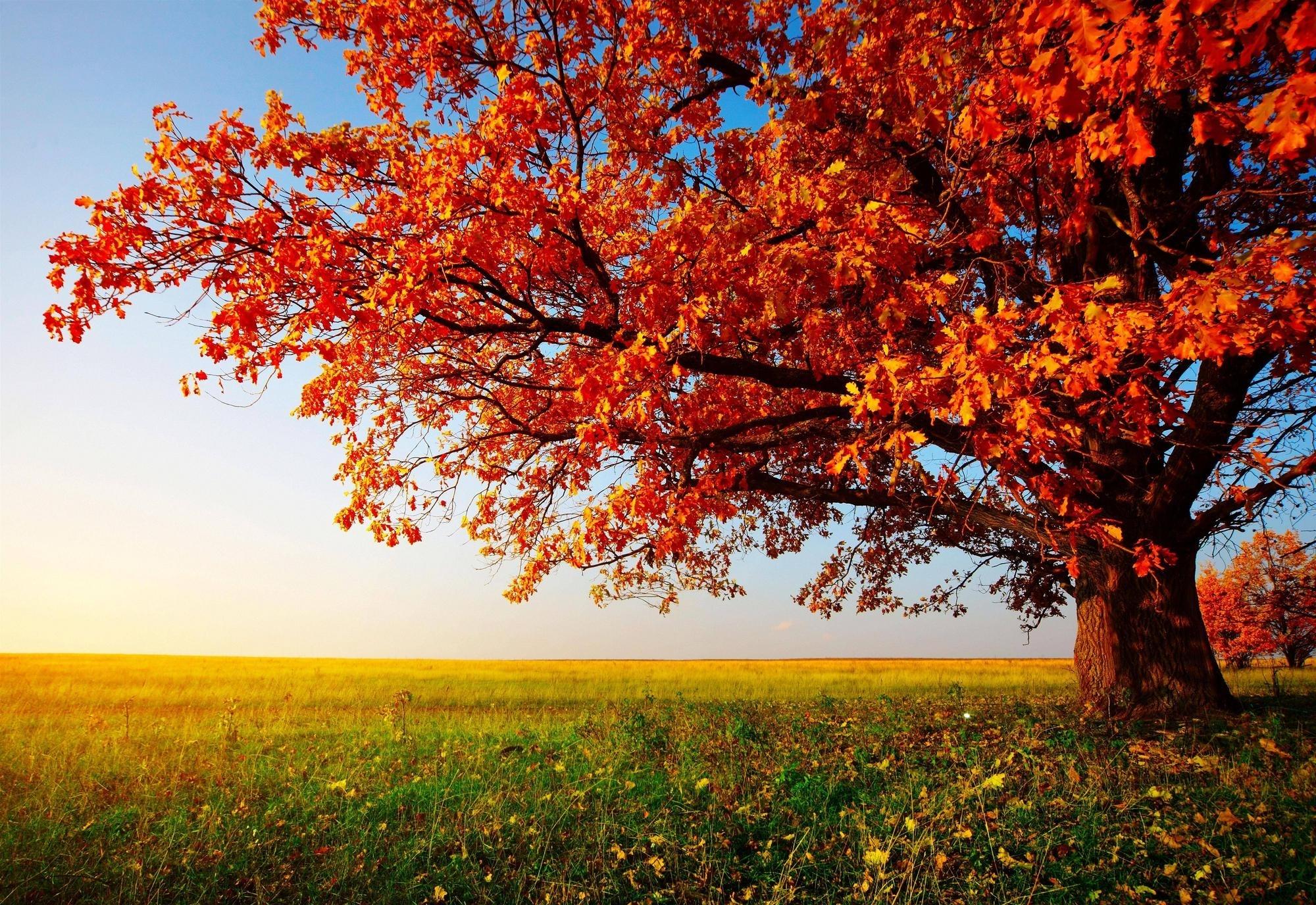 green trees wallpaper hd desktop hd wallpapers semangat | hd