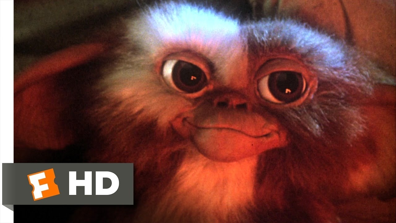 gremlins (1/6) movie clip - billy meets gizmo (1984) hd - youtube