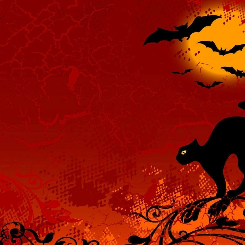 10 Latest Halloween Cat Desktop Wallpaper FULL HD 1080p For PC Desktop 2018 free download halloween cat wallpaper spooky feel backgrounds red the holiday 800x800