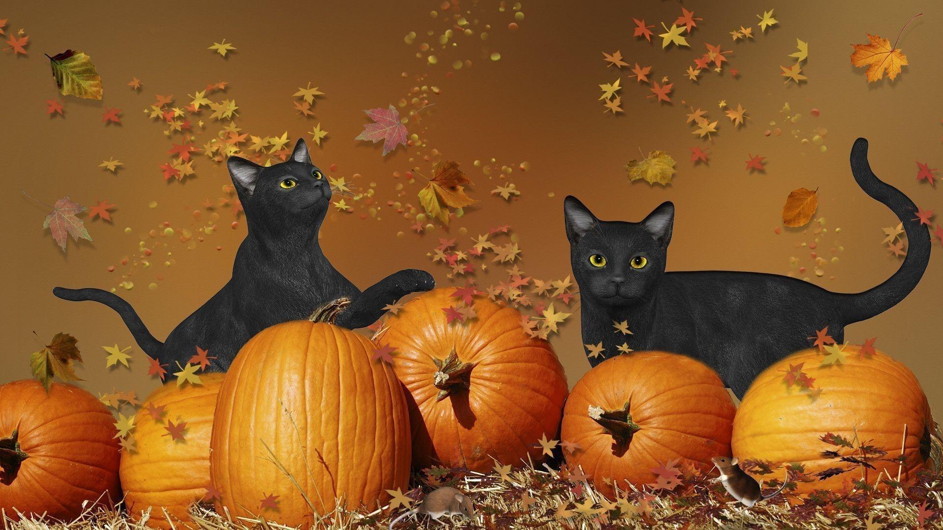 halloween cat wallpapers - wallpaper cave