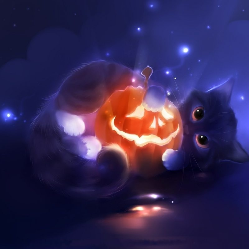 10 Latest Halloween Cat Desktop Wallpaper FULL HD 1080p For PC Desktop 2018 free download halloween full hd wallpaper and background image 1920x1080 id176202 800x800