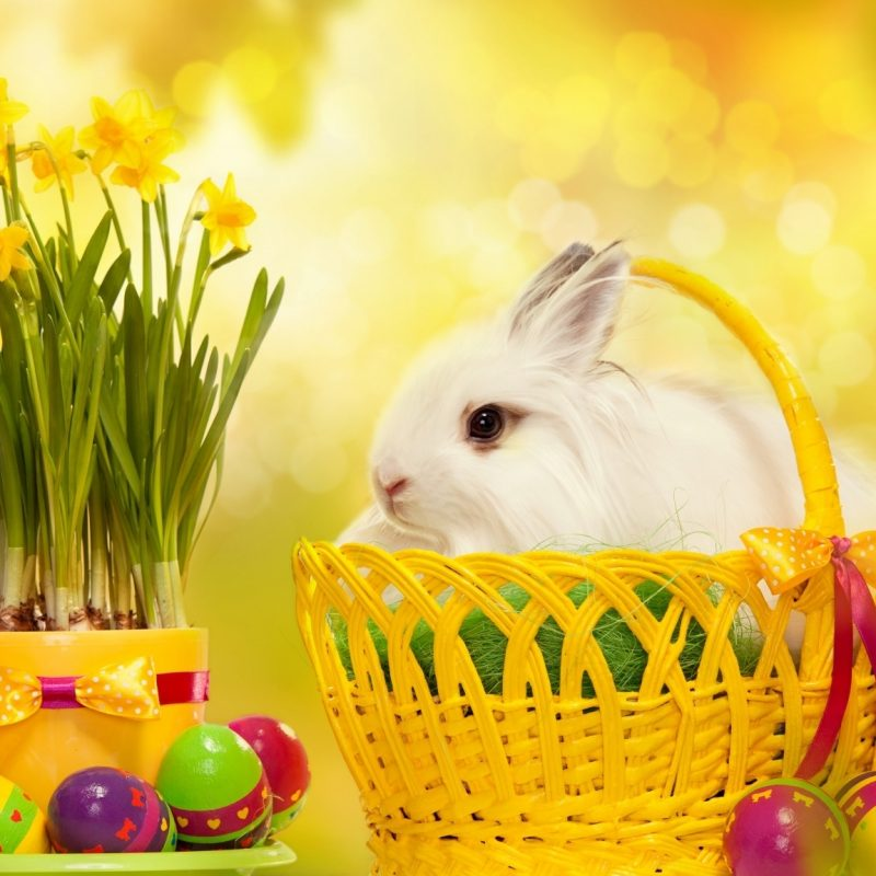 10 Top Free Happy Easter Wallpaper FULL HD 1080p For PC Background 2018 free download happy easter bunny 50333 easter festival 800x800
