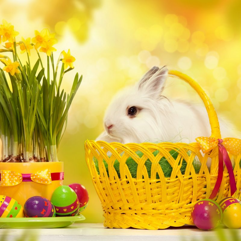10 Top Happy Easter Images Hd FULL HD 1080p For PC Background 2020 free download happy easter bunny e29da4 4k hd desktop wallpaper for 4k ultra hd tv 800x800