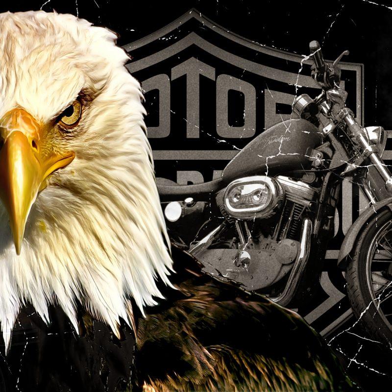 10 Best Harley Davidson Eagle Wallpaper FULL HD 1920×1080 For PC Desktop 2018 free download harley davidson wallpaper 985 harley davidson pinterest 800x800