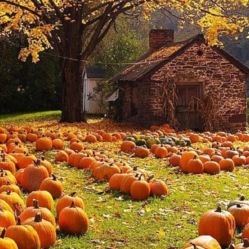 10 Top Autumn Harvest Desktop Backgrounds FULL HD 1080p For PC Background 2018 free download harvest wallpaper for my desktop 55 images 800x800