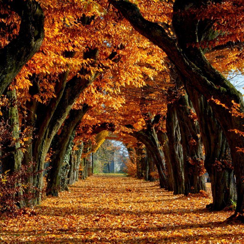 10 Best Hd Autumn Wallpapers 1080P FULL HD 1920×1080 For PC Desktop 2021 free download hd autumn wallpaper c2b7e291a0 800x800