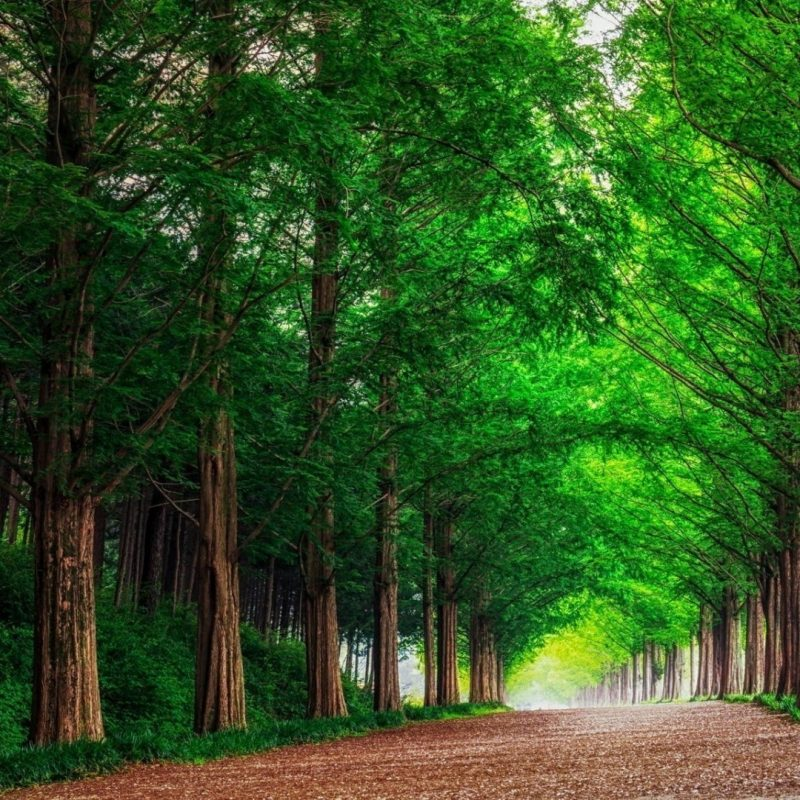 10 Top Forest Wallpaper Full Hd FULL HD 1080p For PC Desktop 2018 free download hd background green forest trees straight road wallpaper 800x800