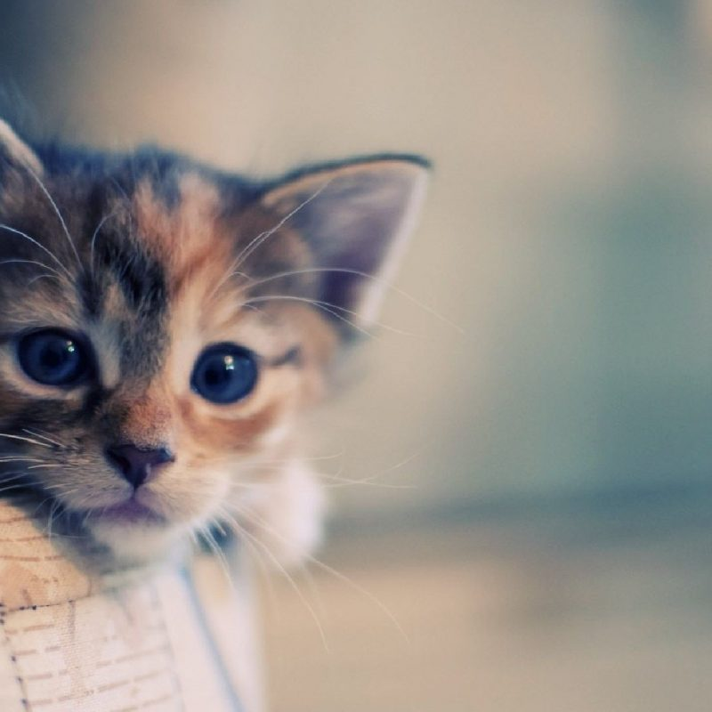 10 Latest Cute Cat Hd Wallpaper 1920X1080 FULL HD 1920×1080 For PC Background 2018 free download hd cat wallpapers 1920x1080 google kereses catttttt pinterest 800x800