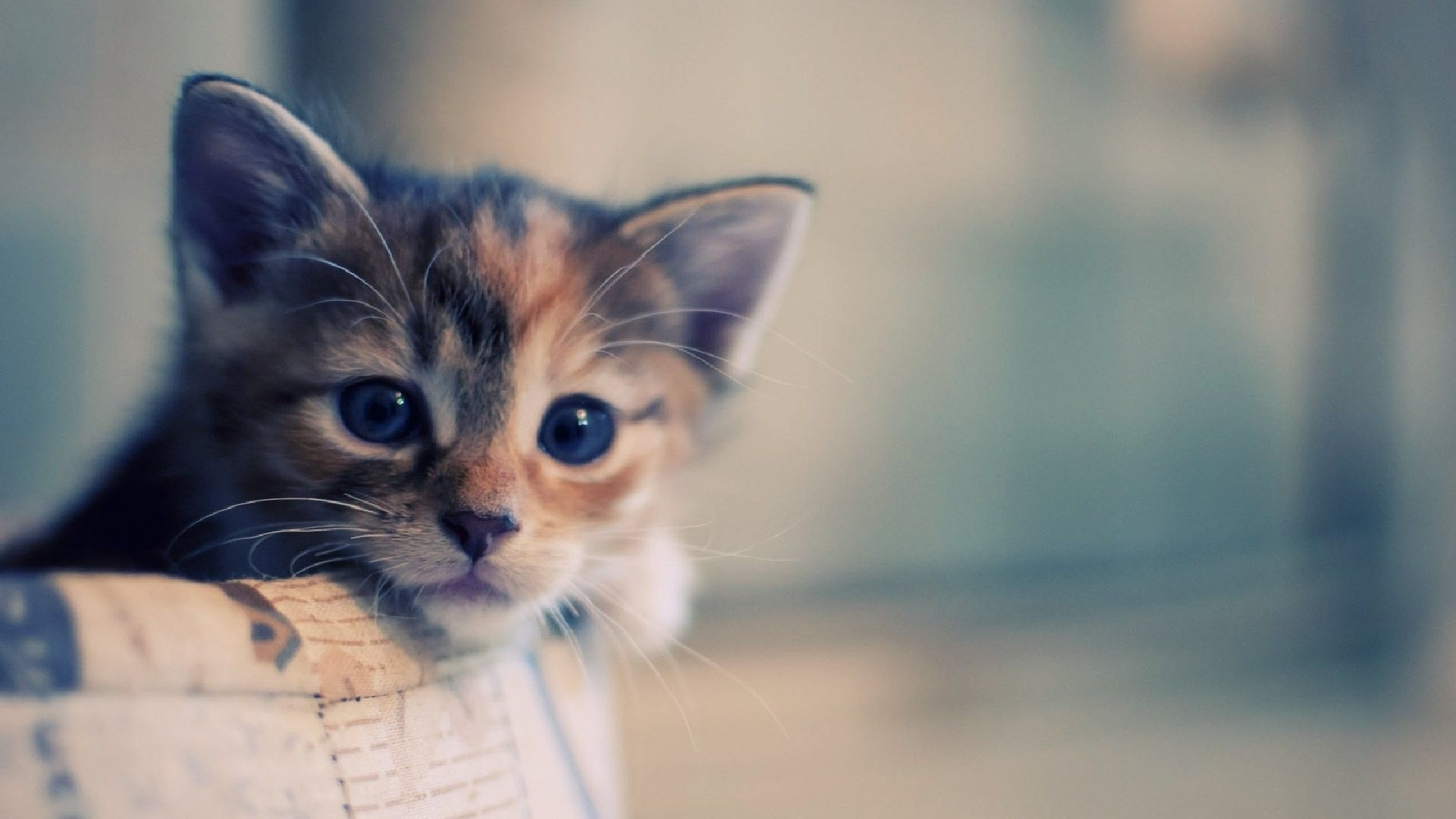 hd cat wallpapers 1920x1080 - google keresés | catttttt | pinterest