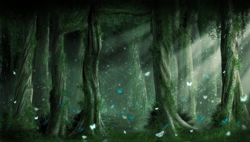 10 Most Popular Dark Enchanted Forest Background FULL HD 1920×1080 For PC Background 2021 free download hd fantasy forest wallpaper 24650 hd wallpapers random stuff in 800x454