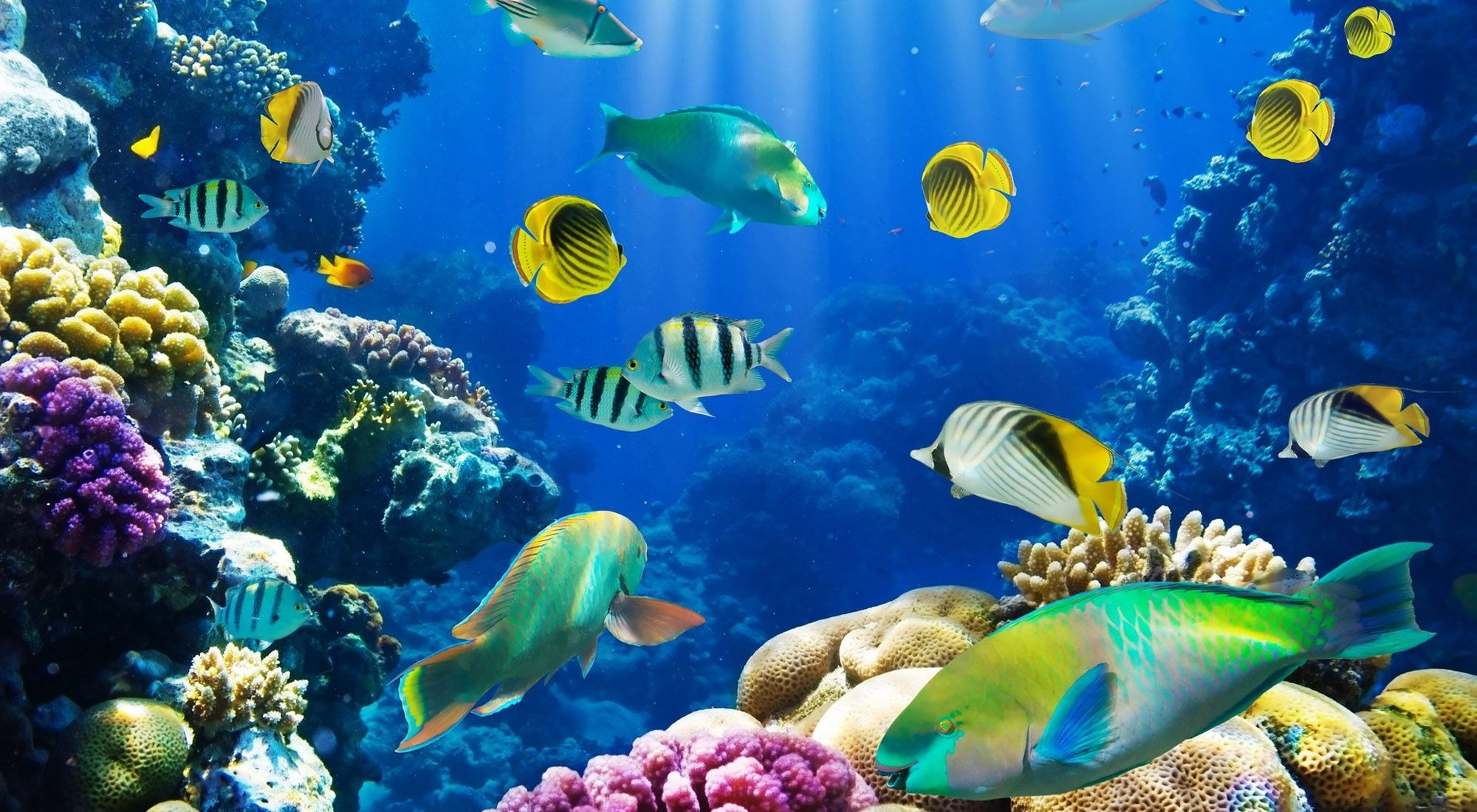 hd fish wallpapers: find best latest hd fish wallpapers in hd for