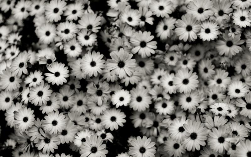10 Latest Flowers Tumblr Wallpaper FULL HD 1080p For PC Desktop 2021 free download hd flower tumblr wallpapers and photos hd flowers wallpapers 800x500