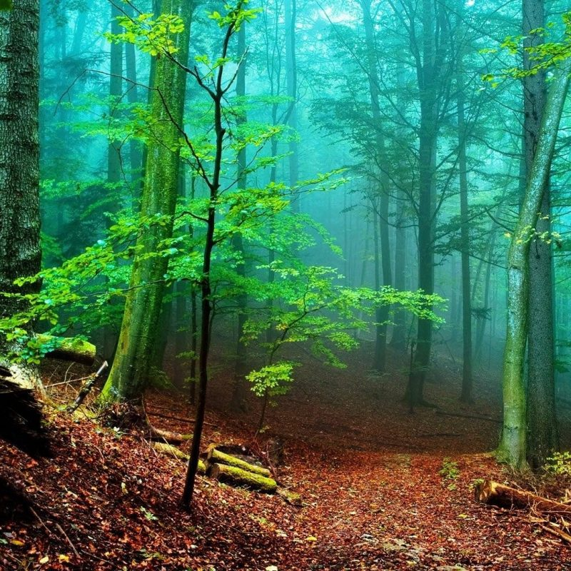 10 Latest Hd Forest Wallpapers 1080P FULL HD 1080p For PC Background 2018 free download hd forest wallpapers wallpaper cave 1 800x800