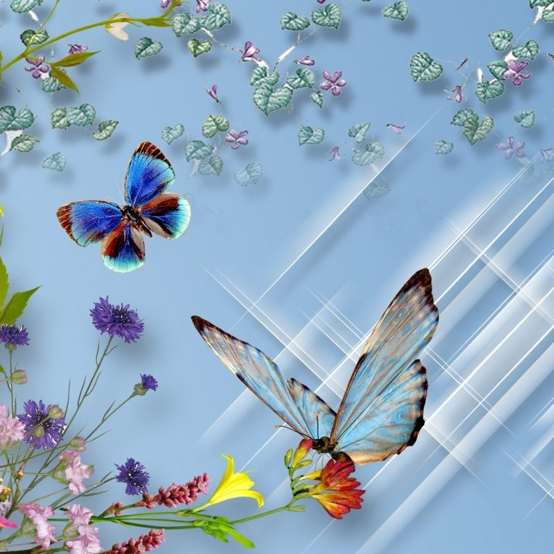 10 Most Popular Wallpapers Butterfly Free Download FULL HD 1080p For PC Background 2020 free download hd free download butterfly wallpaper 800x800