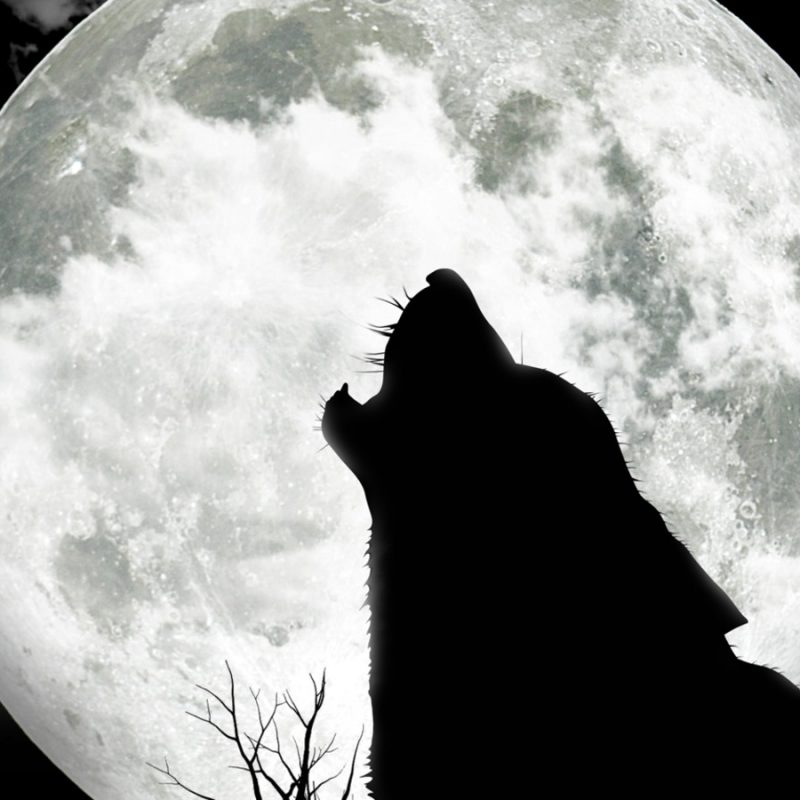 10 Latest Wolf And Moon Wallpaper FULL HD 1080p For PC Desktop 2021 free download hd full moon wolf wallpaper 800x800