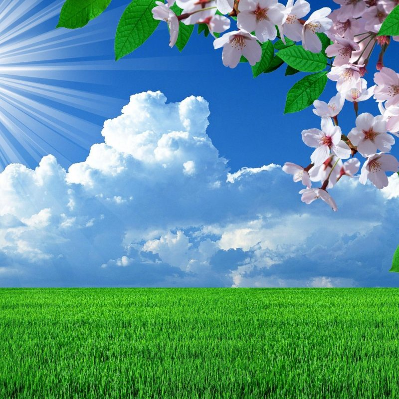 10 Top Background Images Nature Spring FULL HD 1080p For PC Background 2018 free download hd nature spring flowers landscapes trees sky landscape background 800x800