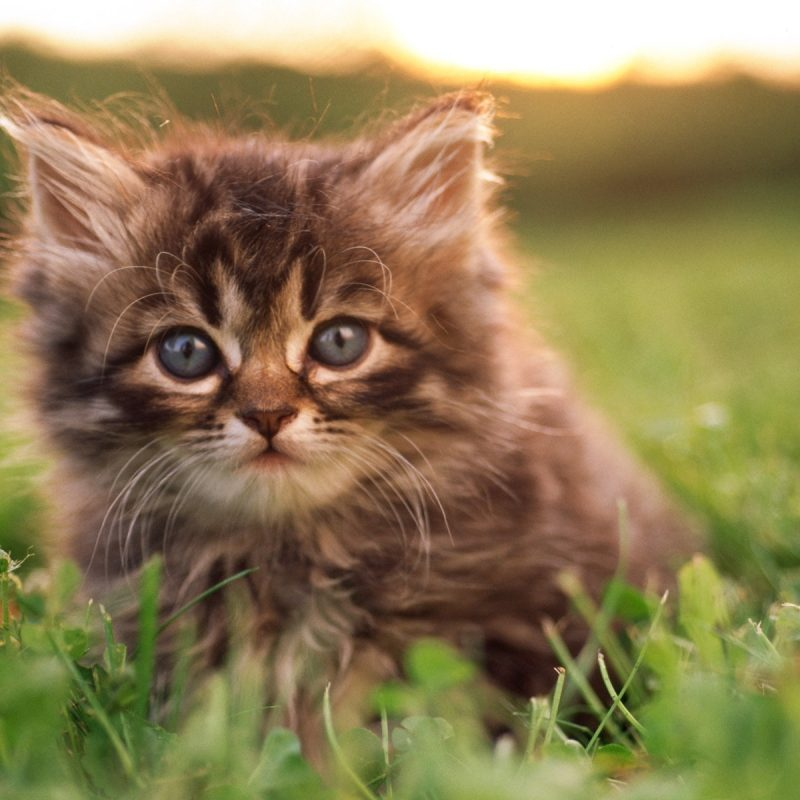 10 New Cute Baby Kitten Pics FULL HD 1920×1080 For PC Background 2018 free download hd sweet kitty adorable fluffy baby kittens widescreen wallpapers 800x800