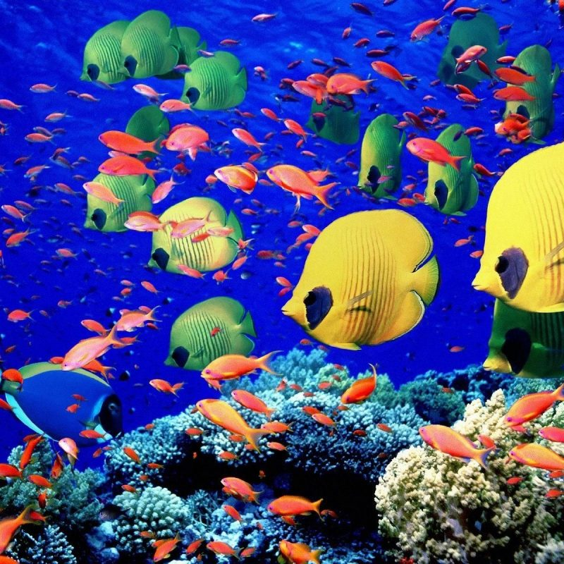 10 New Colorful Coral Reefs Wallpaper Hd FULL HD 1080p For PC Desktop 2020 free download hd wallpaper 3d under the sea wallpapers wallpapers pinterest 800x800