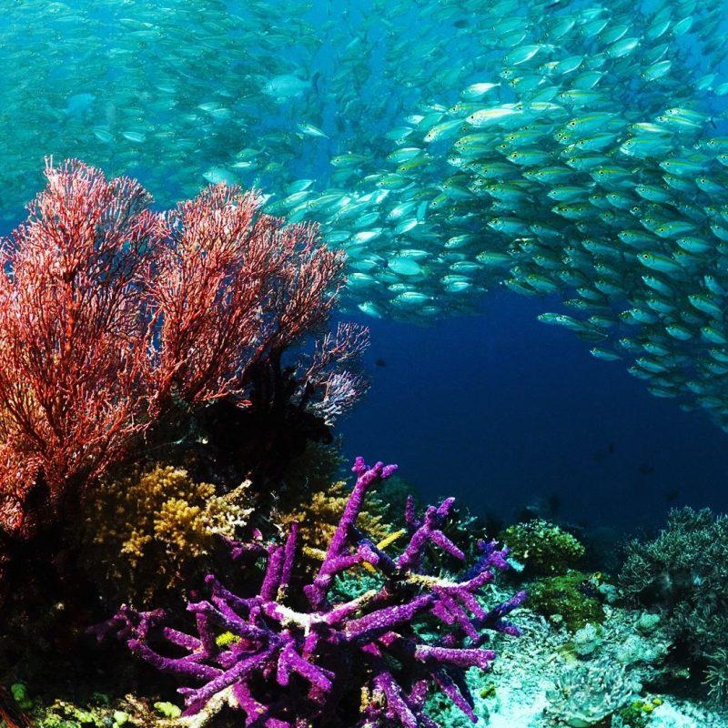 10 New Coral Reef Wallpaper 1920X1080 FULL HD 1080p For PC Desktop 2020 free download hd wallpaper underwater wallpaper beautiful wallpapers for 800x800