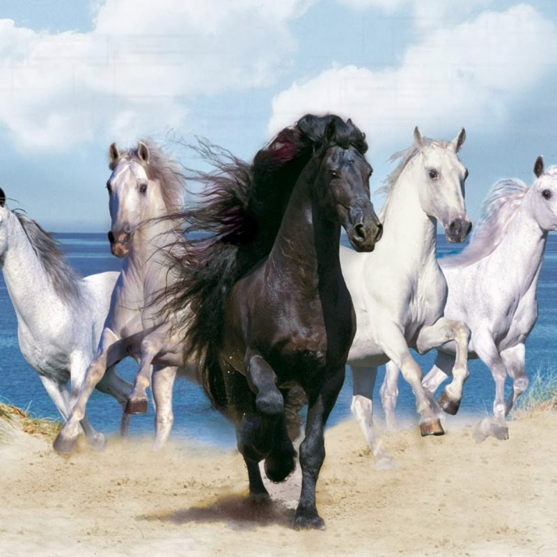 10 Latest Horse Backgrounds For Computer FULL HD 1920×1080 For PC Desktop 2021 free download hd wallpapers desktop horse free beautiful desktop wallpapers 2014 800x800