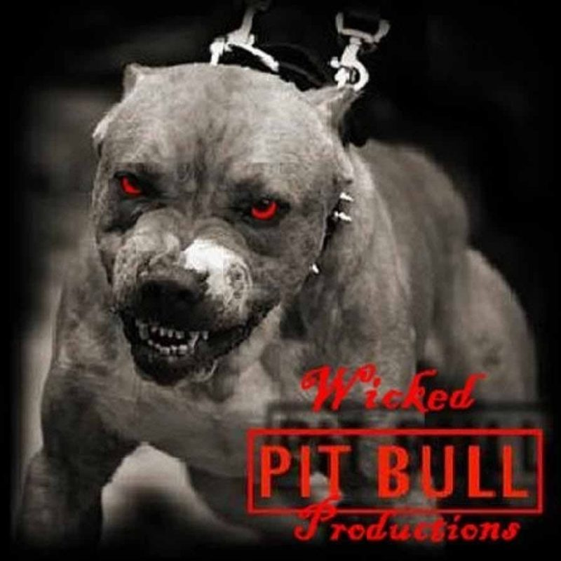 10 Best Wallpaper Of Pit Bulls FULL HD 1080p For PC Background 2020 free download hd wallpapers pitbull dog wallpapers pitbulls pinterest hd 800x800