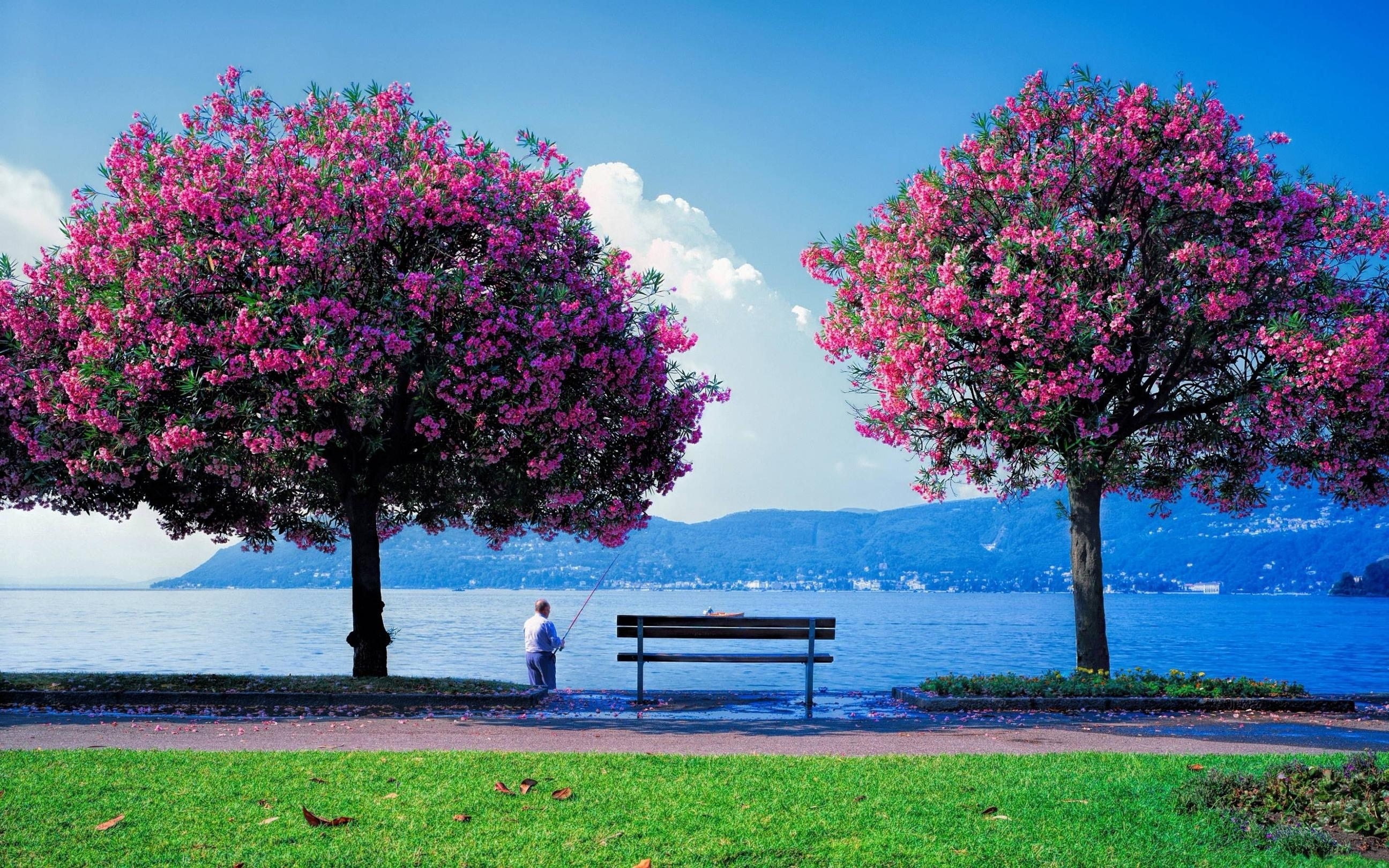 10 most popular wallpapers hd nature spring full hd 1080p - Most popular hd wallpapers 1080p ...