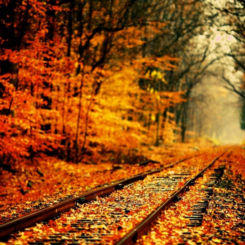 10 Best High Definition Autumn Wallpaper FULL HD 1920×1080 For PC Background 2018 free download high definition fall wallpapers season wallpaper pinterest 800x800