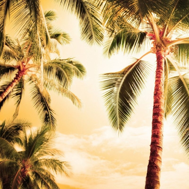 10 Best Palm Trees Wallpaper Hd FULL HD 1080p For PC Background 2018 free download high palm tree wallpapers tree wallpapers hd wallpapers top 800x800
