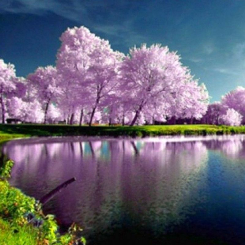 10 Latest Spring Nature Wallpapers High Resolution FULL HD 1080p For PC Desktop 2018 Free Download