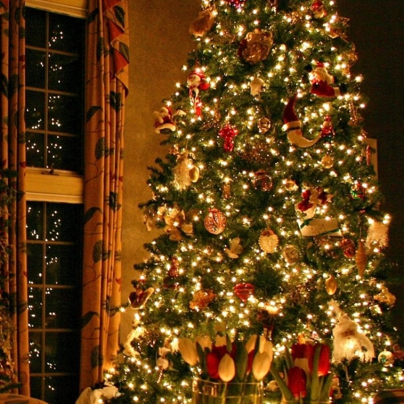 10 Best Christmas Tree Phone Wallpaper FULL HD 1080p For PC Background 2021 free download holiday christmas 750x1334 wallpaper id 591550 mobile abyss 800x800