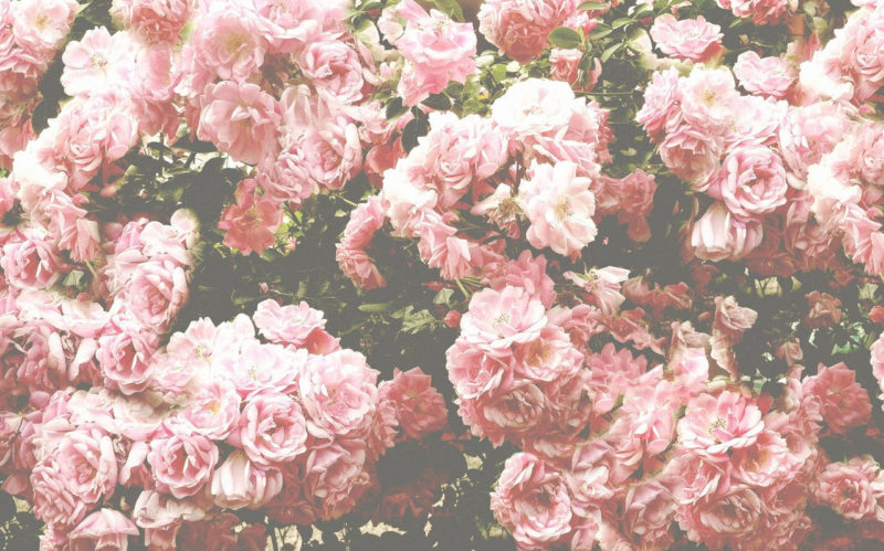 10 Latest Flowers Tumblr Wallpaper FULL HD 1080p For PC Desktop 2021 free download hoontoidly roses tumblr background quotes images 800x499