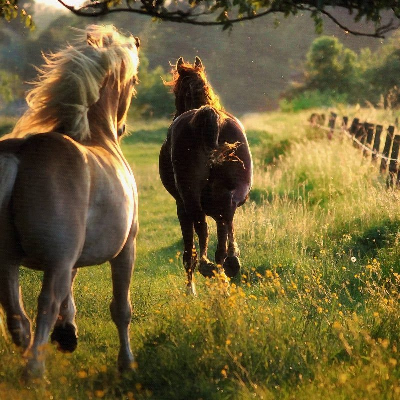 10 Best Horses Pics For Backgrounds FULL HD 1920×1080 For PC Desktop 2021 free download horse pics for backgrounds wallpaper cave 800x800