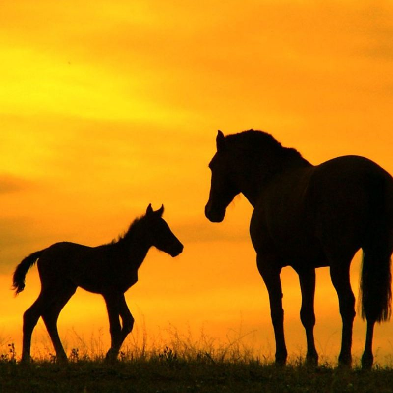 10 Latest Horse Backgrounds For Computer FULL HD 1920×1080 For PC Desktop 2021 free download horse ranch sunset wallpaper hd desktop background 800x800