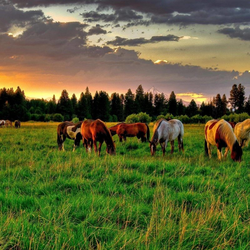 10 Latest Horse Backgrounds For Computer FULL HD 1920×1080 For PC Desktop 2021 free download horse wallpaper for computer c2b7e291a0 1 800x800