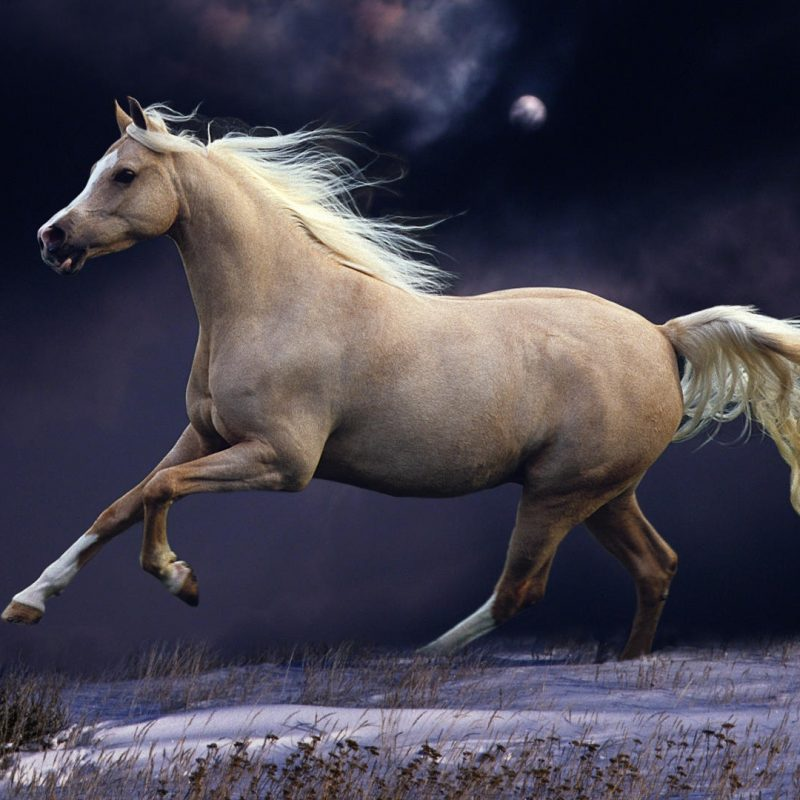 10 New Beautiful Horses Pictures Wallpapers FULL HD 1920×1080 For PC Desktop 2020 free download horse wallpapers best wallpapers 1 800x800
